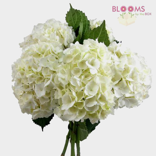 save money on wedding flowers