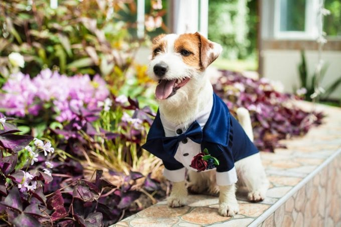 dog tuxedos for weddings