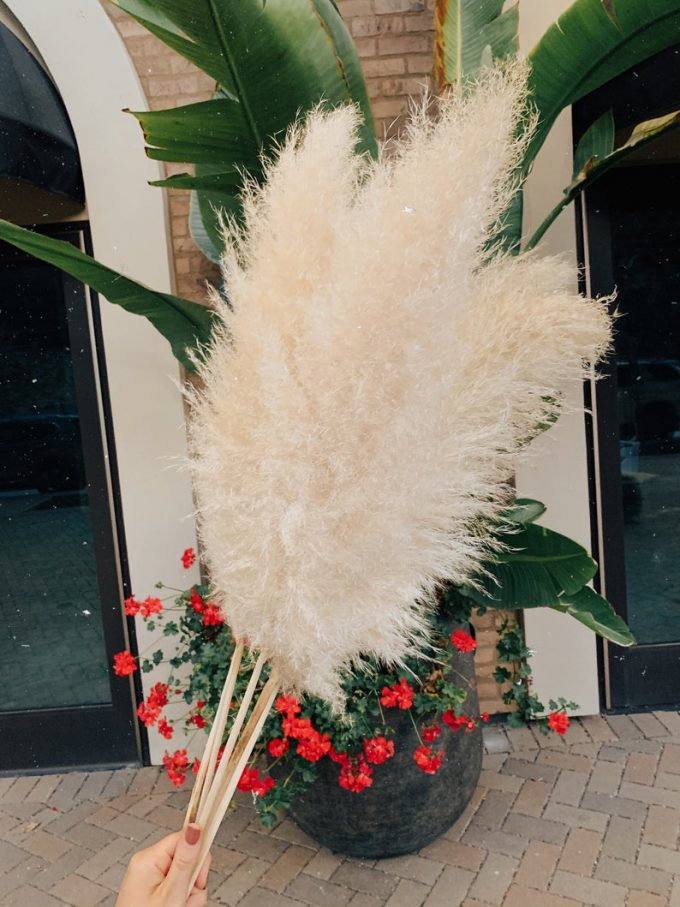 where to buy pampas grass for wedding
