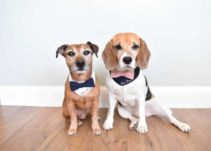 best dog wedding outfit