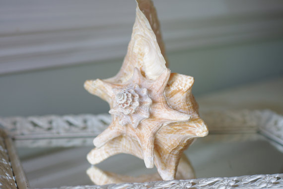 10 Beach Wedding Centerpieces via EmmalineBride.com - conch shell by By The Seashore