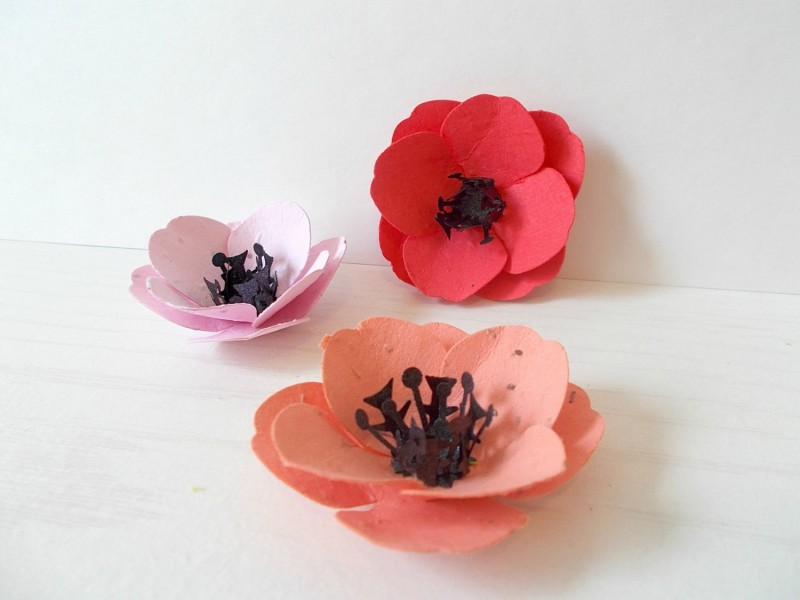 plantable poppies